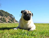 Dog on the grass — Stockfoto