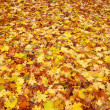 Nice autumn leaves — Stock Photo