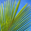 Palm tree leaf N51 — Stock Photo