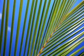 Palm tree leaf — Stock Photo