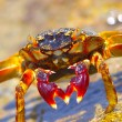 The Big Crab — Stock Photo