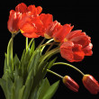 Bouquet of tulips — Stock Photo #21115337