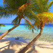EXELENT BEACH WITH PALM TREES — Stock Photo