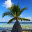 WONDERFUL BEACH WITH PALM TREE — Stock Photo