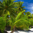 Attractive palmtrees - Stock Photo