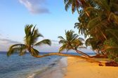 FANTASTIC SUNSET BEACH WITH PALM TREES — Stock Photo