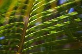Tropik bir ormanda — Stok fotoğraf