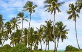 Good seascape view with palmtrees — Stock Photo