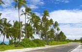 Seascape view with palmtrees — Stock Photo