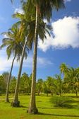 Nice tropical park in Indian Ocean — Stock Photo