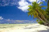 Attractive palmtrees in Indian Ocean — Stock Photo