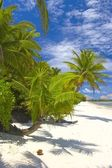 Superior palmtrees on the beach in Indian Ocean — Stock Photo