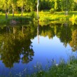 Reflection the sunset forest in a pond — Stock Photo
