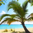 Coral beach — Stock Photo