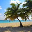Two palms are on a tropical beach - Stock Photo