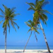 Three palms are on a tropical beach — Stock Photo