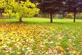 Parco d'autunno — Foto Stock