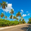 Tropical road - Stock Photo