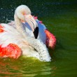 Red flamingo - Stock Photo