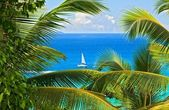 Tropical melody — Stock Photo