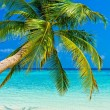 Tropical beach — Stock Photo #21808889