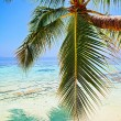 Tropical beach — Stock Photo #21808915