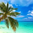 Tropical beach — Stock Photo #21809245