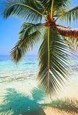 Plage tropicale — Photo