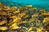Big school of fish — Stock Photo