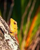 Lizard sitting on a tree trunk — Stok fotoğraf