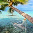 Beach hammock — Stock Photo #23667805