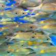 Royalty-Free Stock Photo: School of fish