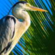 Heron — Stock Photo #24305937
