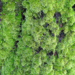 Stock Photo: Moss on a tree