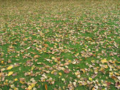 Leaves on the ground — Foto de Stock
