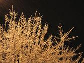 Helado de ramas de los árboles — Foto de Stock