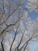 冬天树 — 图库照片