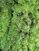Musgo en el árbol — Foto de Stock