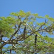 Tropical tree — Photo