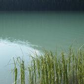 Grass in lake — Stock Photo