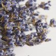 Macro shooting of lavender for background — Stock Photo