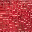 Red crocodile skin texture - Stock Photo