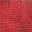 Red crocodile skin texture — Stock Photo