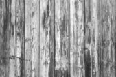 Black and white texture of wood — Foto Stock