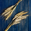 Two types of wheat on a blue wooden board — Stock Photo #29093189