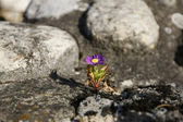 Flower in Stone — Stock Photo