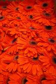 Streszczenie tło kwiatów. szczelnie-do góry — Zdjęcie stockowe