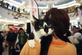 Black and white cat on her shoulder woman — Foto Stock