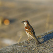 Sparrow House standing on a concrete — Stock Photo
