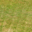 Green grass freshly mown background — Foto de stock #36163473